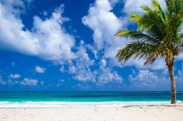 Белый пляж с пальмой