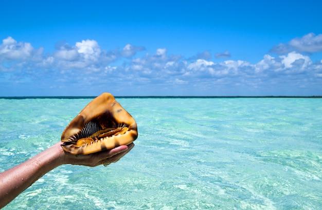 Держать раковину на тропическом пляже
