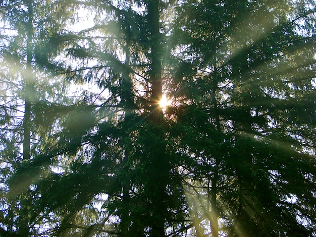 太陽の光の森