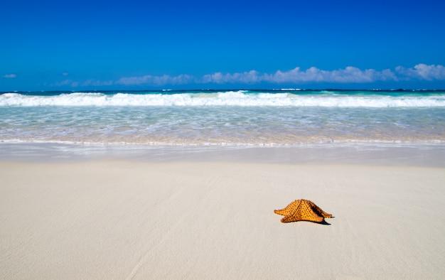 ヒトデとビーチ