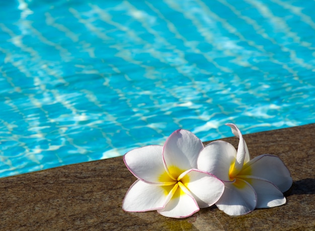 Цветы возле бассейна