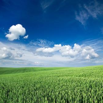 Поле и голубое небо