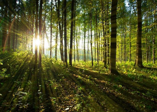 Лесные деревья