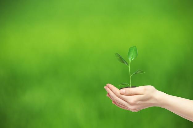 緑の植物を保持している手