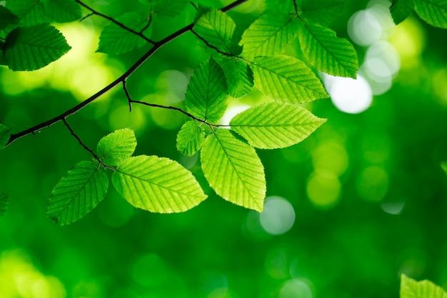 緑の背景に緑の葉