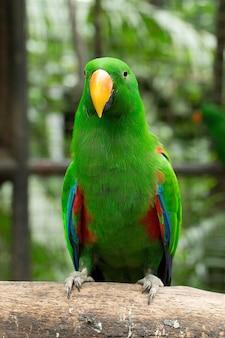 Птица попугай