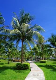ホテルリゾート。草の庭の石の道。