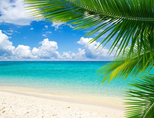 Пальма на пляже, вид на море