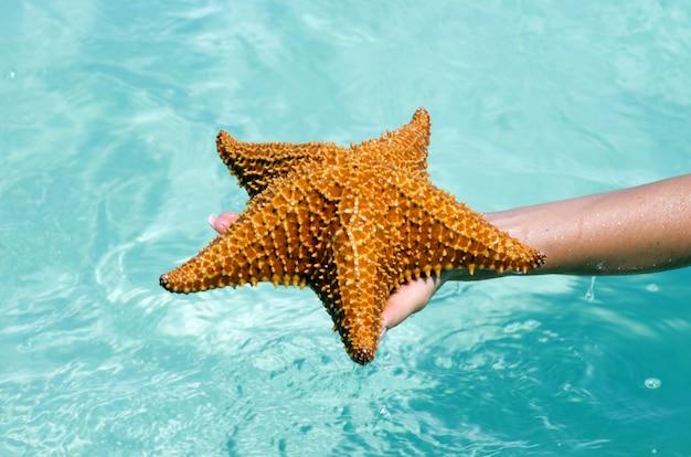 Морская звезда в руке