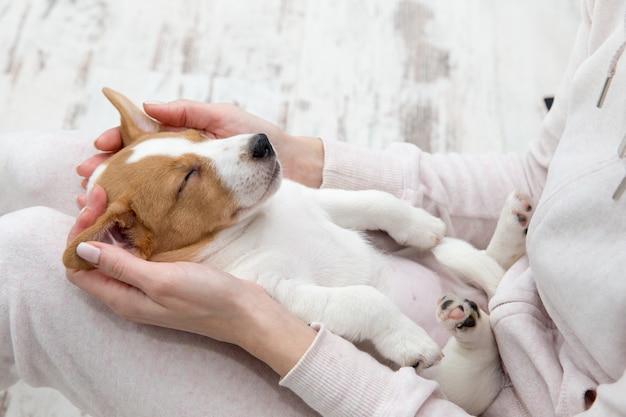 テリエの手を眠っている子犬ジャックラッセル犬