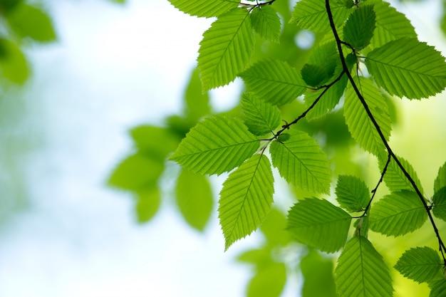 Естественный зеленый фон