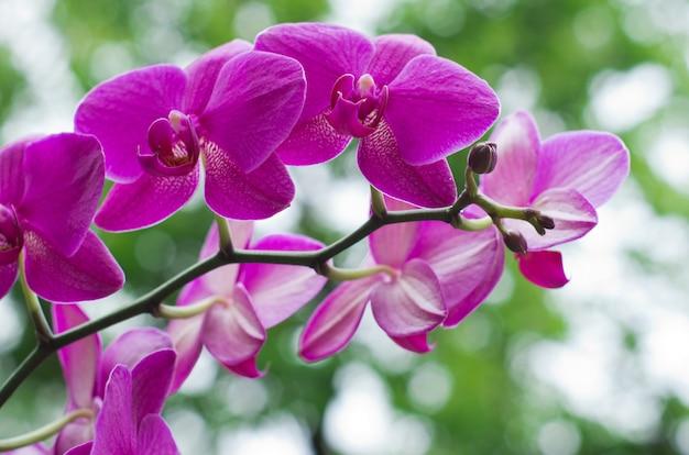 緑の蘭の花
