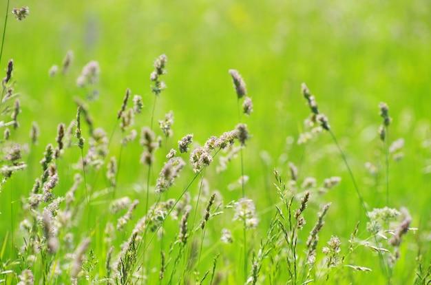 Поле зеленая трава пейзаж
