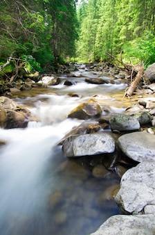 森の中の自然の川