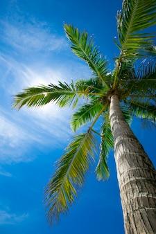 Кокосовые пальмы, красивый тропический фон