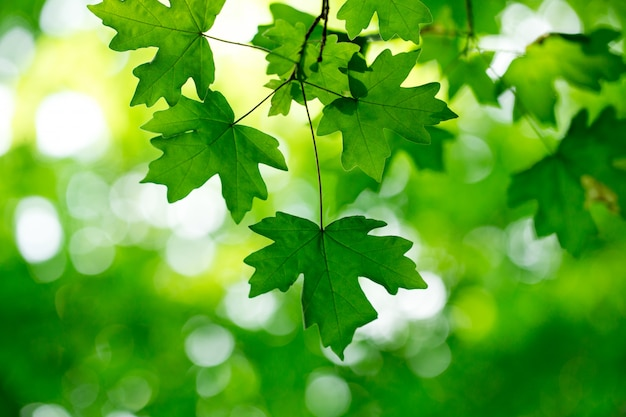 Зеленые листья на зеленом фоне
