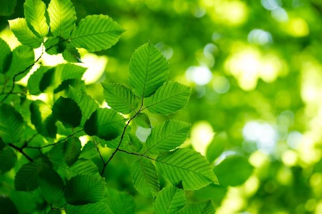 Рин листья на зеленом фоне