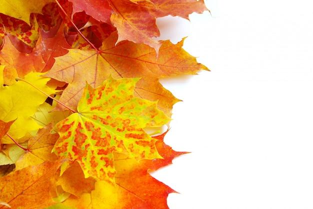 秋のカエデの葉白