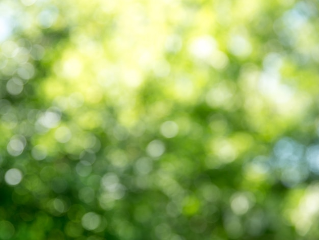 自然な緑背景をぼかした写真
