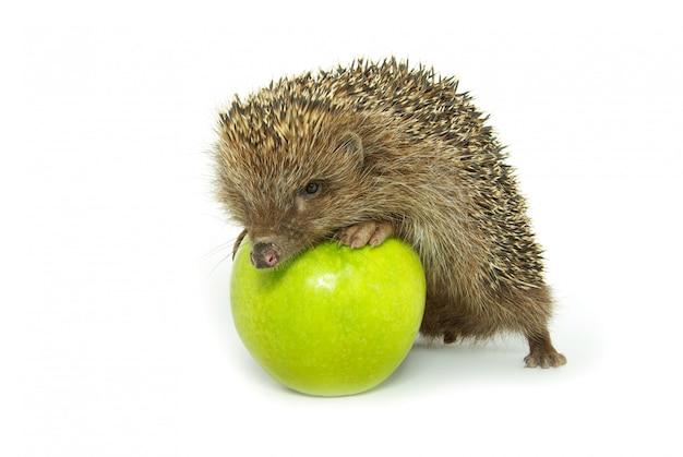 ハリネズミとリンゴ