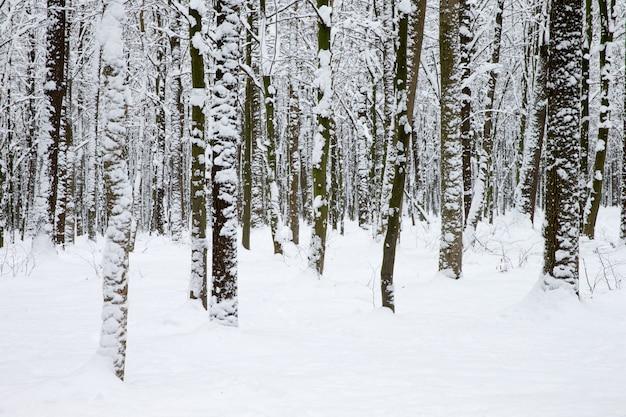冬の森と道路。冬の風景