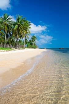 Пляж и тропическое море