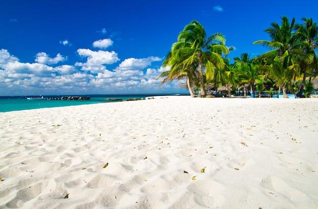 Песчаный пляж с пальмами