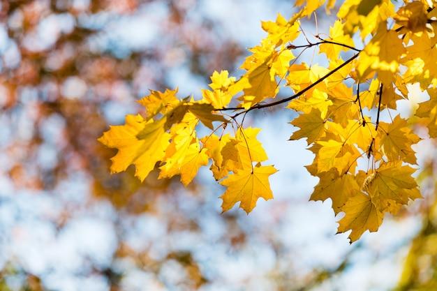 Осенние листья в солнечный день