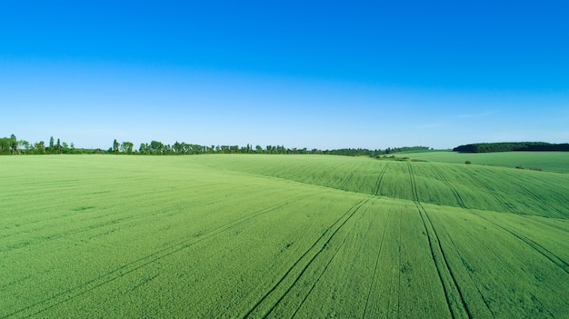 Зеленое поле и голубое небо