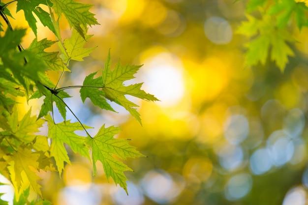 晴れた日に秋の森。秋の葉