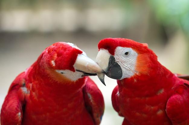 Попугай птица сидит на окуня