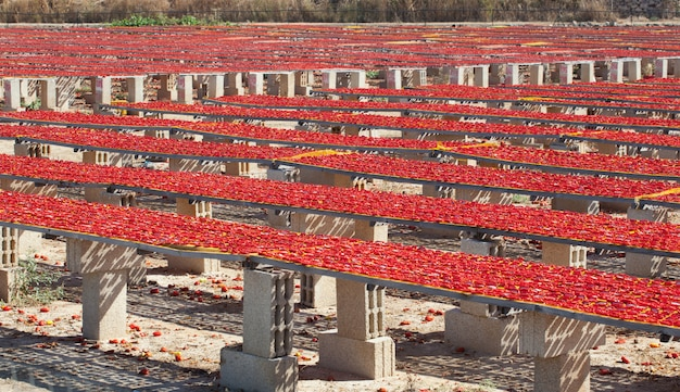 乾燥赤完熟トマト、