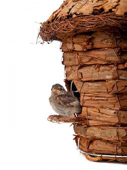 小さなスズメと巣箱