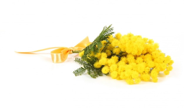 ミモザの花の小枝