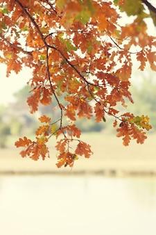 秋の紅葉、湖の上