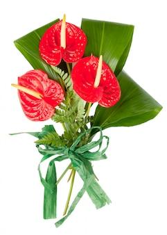 赤いアンスリウムの花