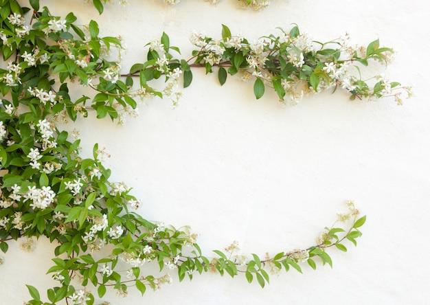 白い壁にジャスミンの花の自然なフレーム
