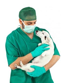 獣医がジャックラッセルを調べる
