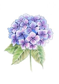 花束の色鉛筆アジサイの花