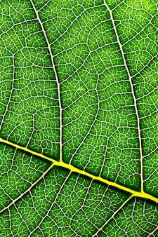 葉のテクスチャ背景
