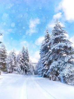 雪に覆われた森と道路のある冬景色。雪の世界。ロドピ山地、ブルガリア