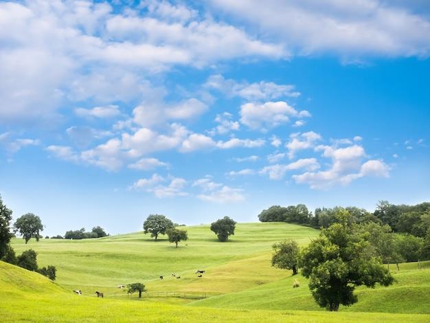 夏の日に緑の牧草地に放牧牛と馬のある田園風景