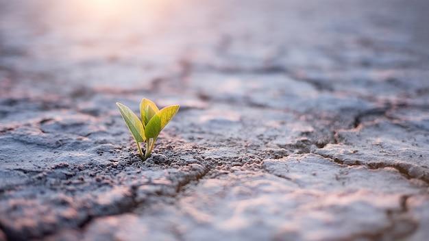 Росток зеленого растения в пустыне