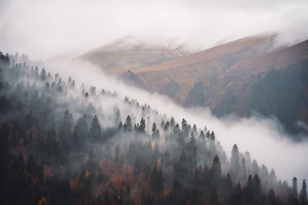 自然の中の霧