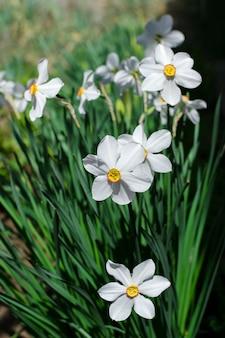 白い美しさの花春垂直写真