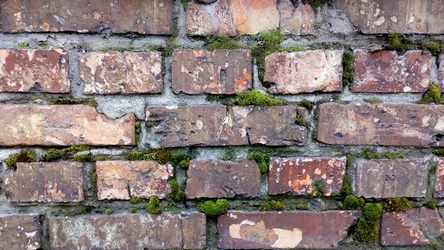 古い赤レンガの壁。モスのテクスチャ。レンガを壊します。