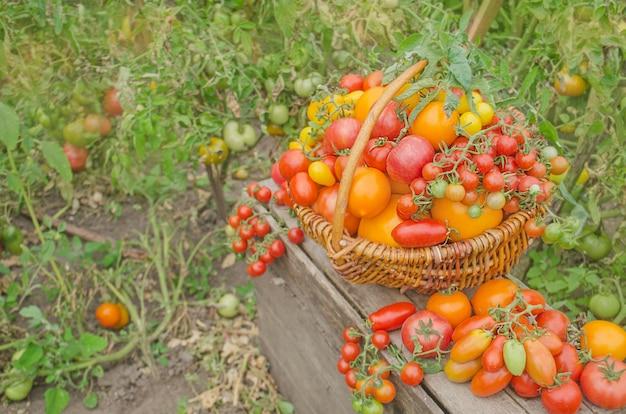 自然の背景にバスケットのトマト
