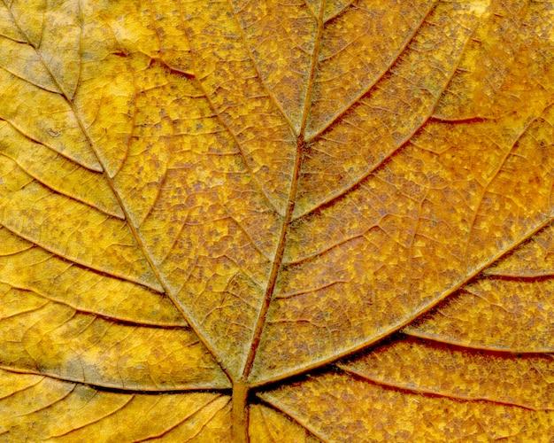 カラフルなクローズアップの美しい秋の紅葉