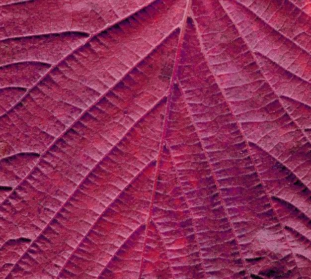 秋の葉の背景をクローズアップ。赤い葉のテクスチャー