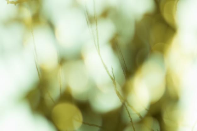 緑の背景をぼかし。フォーカスの葉の背景の緑のボケ味。新鮮なグリーンバイオ抽象背景をぼかし。